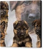 German Shepherd Puppy Collage Canvas Print