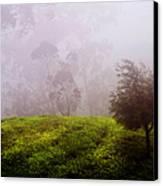 Ghost Tree In The Haunted Forest. Nuwara Eliya. Sri Lanka Canvas Print