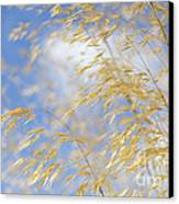 Giant Feather Grass Canvas Print by Tim Gainey