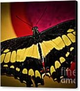 Giant Swallowtail Butterfly Canvas Print