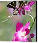 Giant Swordtail Butterfly Graphium Androcles On Orchid Canvas Print by Robert Jensen