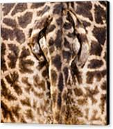 Giraffe Butt Canvas Print by Adam Romanowicz