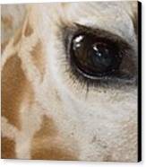 Giraffe Eye Canvas Print