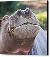 Give Me A Kiss Hippo Canvas Print