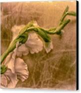 Gladiola Canvas Print by Jill Balsam