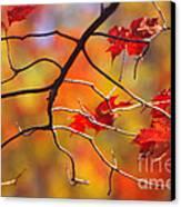 Glory Of Fall Canvas Print