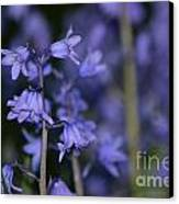 Glowing Blue Bells Canvas Print by Aqil Jannaty