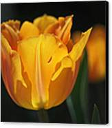 Glowing Tulips Canvas Print by Rona Black