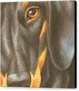 Goggie Daschund Canvas Print