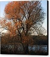 Golden Autumn Canvas Print by Rhonda Humphreys