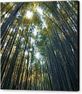 Golden Bamboo Forest Canvas Print by Aaron Bedell