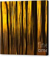 Golden Blur Canvas Print by Anne Gilbert