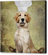 Golden Chef Canvas Print by Susan Candelario