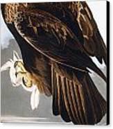 Golden Eagle Canvas Print by John James Audubon