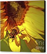 Golden Hoverfly 2 Canvas Print by Sharon Talson