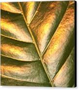 Golden Leaf 2 Canvas Print