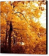 Golden Leaves 2 Canvas Print by Jocelyne Choquette