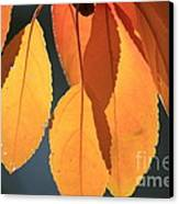 Golden Leaves With Golden Sunshine Shining Through Them Canvas Print