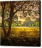 Golden Pastures Canvas Print