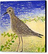 Golden Plover Canvas Print by Anna Skaradzinska