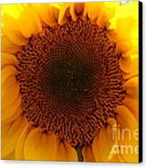 Golden Ratio Sunflower Canvas Print by Kerri Mortenson