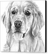 Golden Retriever Jessie Adult Canvas Print by Kate Sumners
