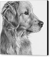 Golden Retriever Puppy In Charcoal One Canvas Print by Kate Sumners