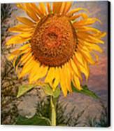 Golden Sunflower Canvas Print by Adrian Evans