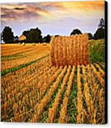 Golden Sunset Over Farm Field In Ontario Canvas Print