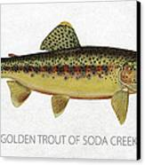 Golden Trout Of Soda Creek Canvas Print by Aged Pixel