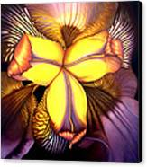 Goldie's Iris Canvas Print