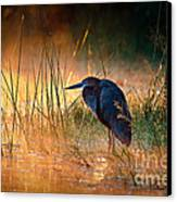Goliath Heron With Sunrise Over Misty River Canvas Print