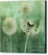 Gone Canvas Print by Priska Wettstein
