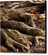 Good Roots Canvas Print by Claudette Bujold-Poirier