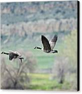 Goose Pair 1 Canvas Print