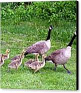 Goose Step Canvas Print by Will Borden