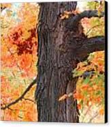 Gorgeous Tree Canvas Print by Lorena Mahoney