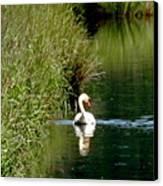 Graceful Swan Canvas Print by Lizbeth Bostrom