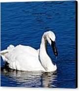Graceful Swan Canvas Print by Rebecca Cozart
