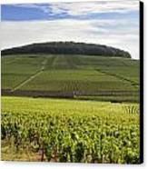 Grand Cru And Premier Cru Vineyards Of Aloxe Corton. Cote De Beaune. Burgundy. France. Europe. Canvas Print by Bernard Jaubert