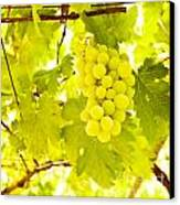 Grape Branch Canvas Print
