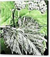 Grape Vine Leaf Canvas Print
