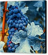 Grapes - Blue  Canvas Print by Hannes Cmarits
