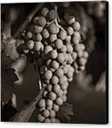 Grapes In Grey 2 Canvas Print