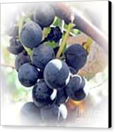 Grapes On The Vine Canvas Print by Kathleen Struckle