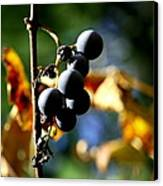 Grapes On The Vine No.2 Canvas Print by Neal Eslinger
