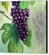 Grapes On The Vine Canvas Print by Prashant Shah