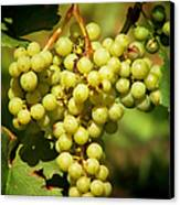 Grapes - Yummy And Healthy Canvas Print by Christine Till