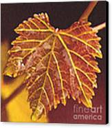 Grapevine In Fall Canvas Print