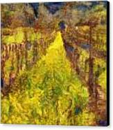Grapevines And Mustard Canvas Print by Alberta Brown Buller